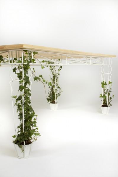 vazonai stalo kojos augalai