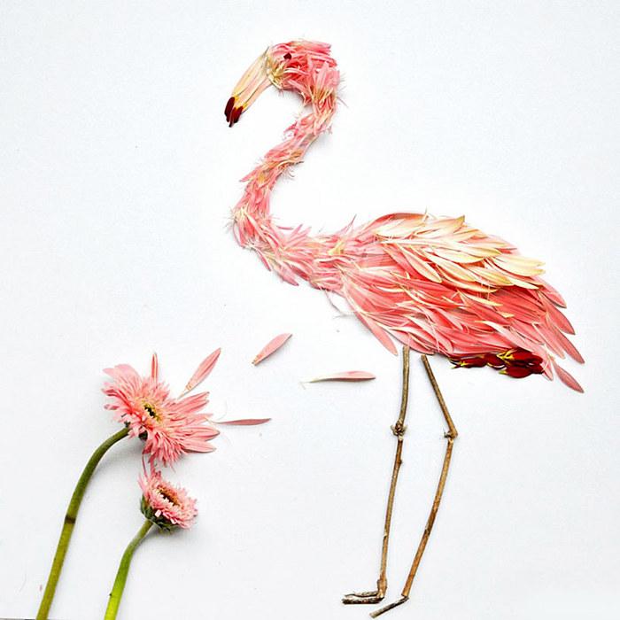 geliu ziedlapiai, flamingas