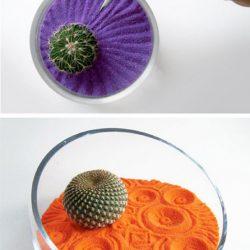 zen indas, kaktusas, smelis, violetinis